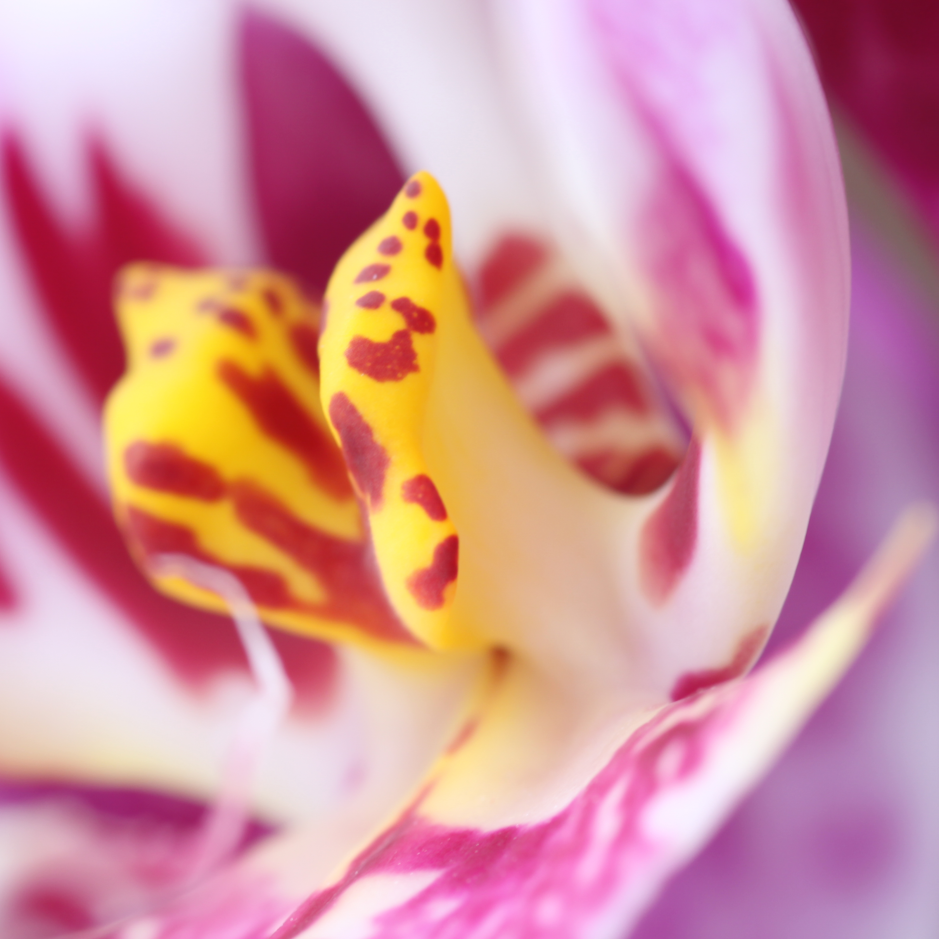 Eine Orchidee in Nahaufnahme