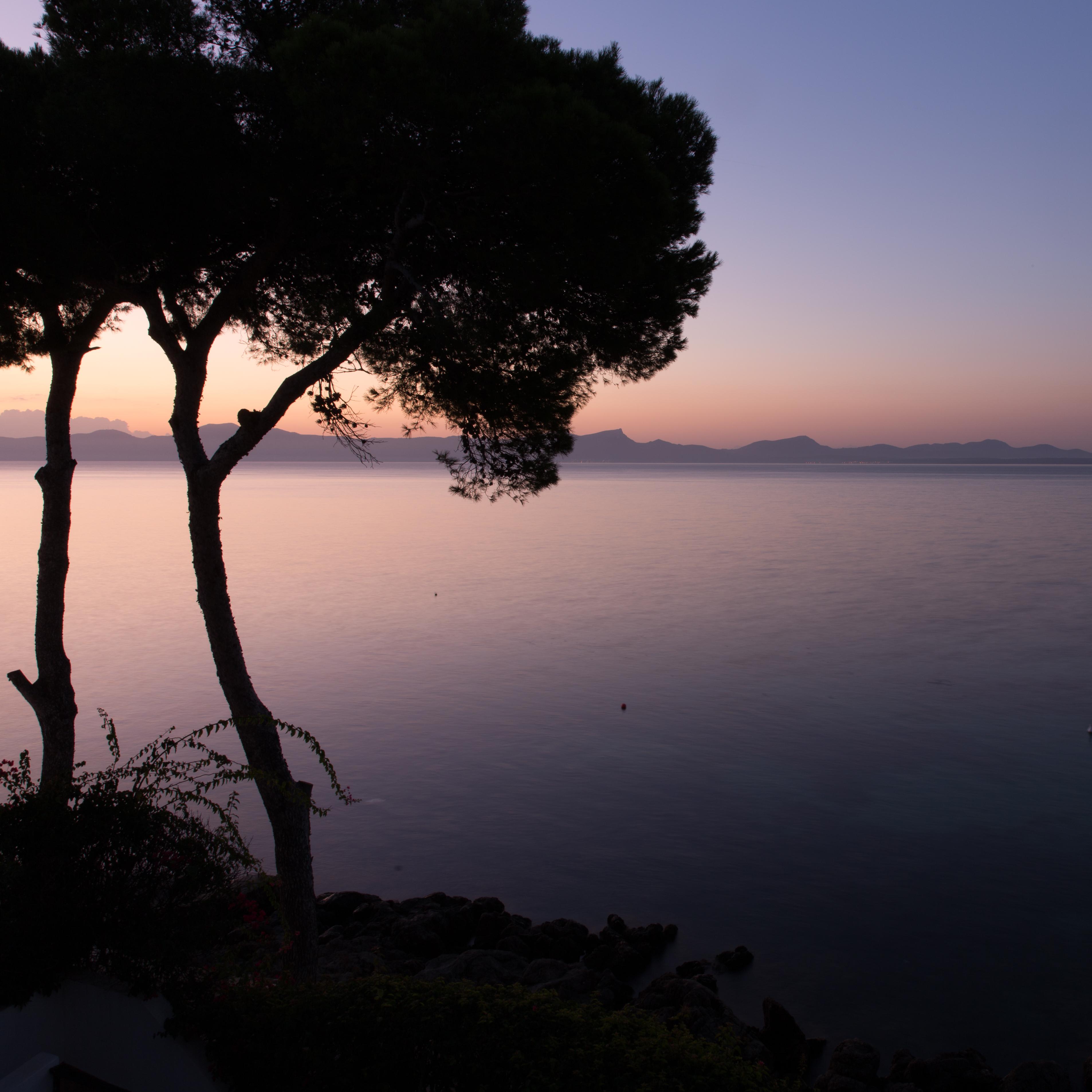 Sonnenaufgang am Meer mit Silhouette eines Baumes