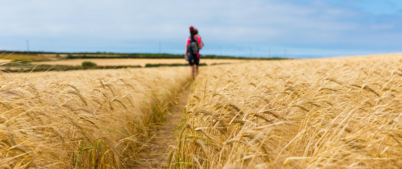 Schmaler Weg durch ein Weizenfeld mit Menschen im Hintergrund