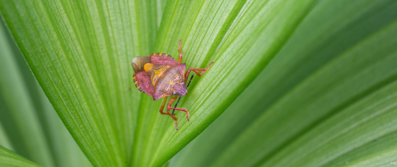 Nahaufnahme einer Wanze auf einem grünen Pflanzenblatt