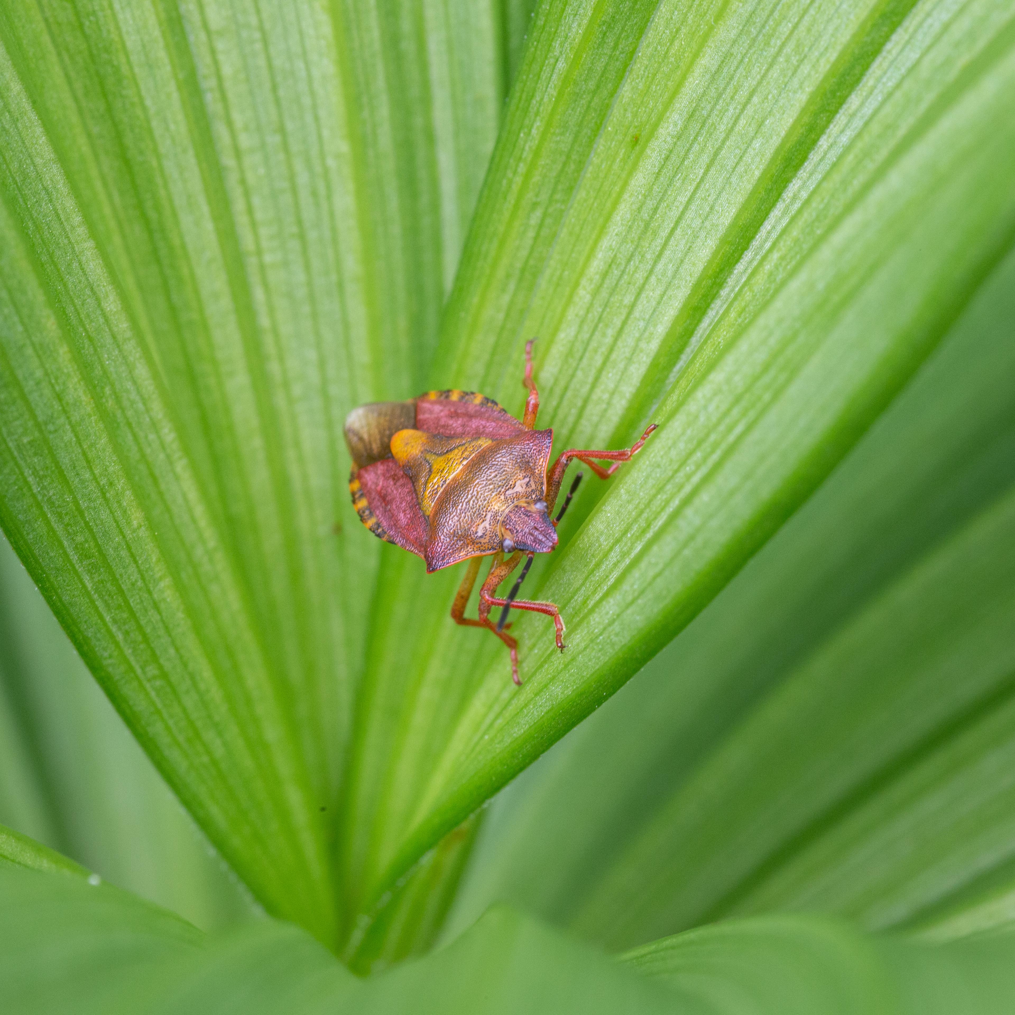 Nahaufnahme einer Wanze in einer grünen Pflanze