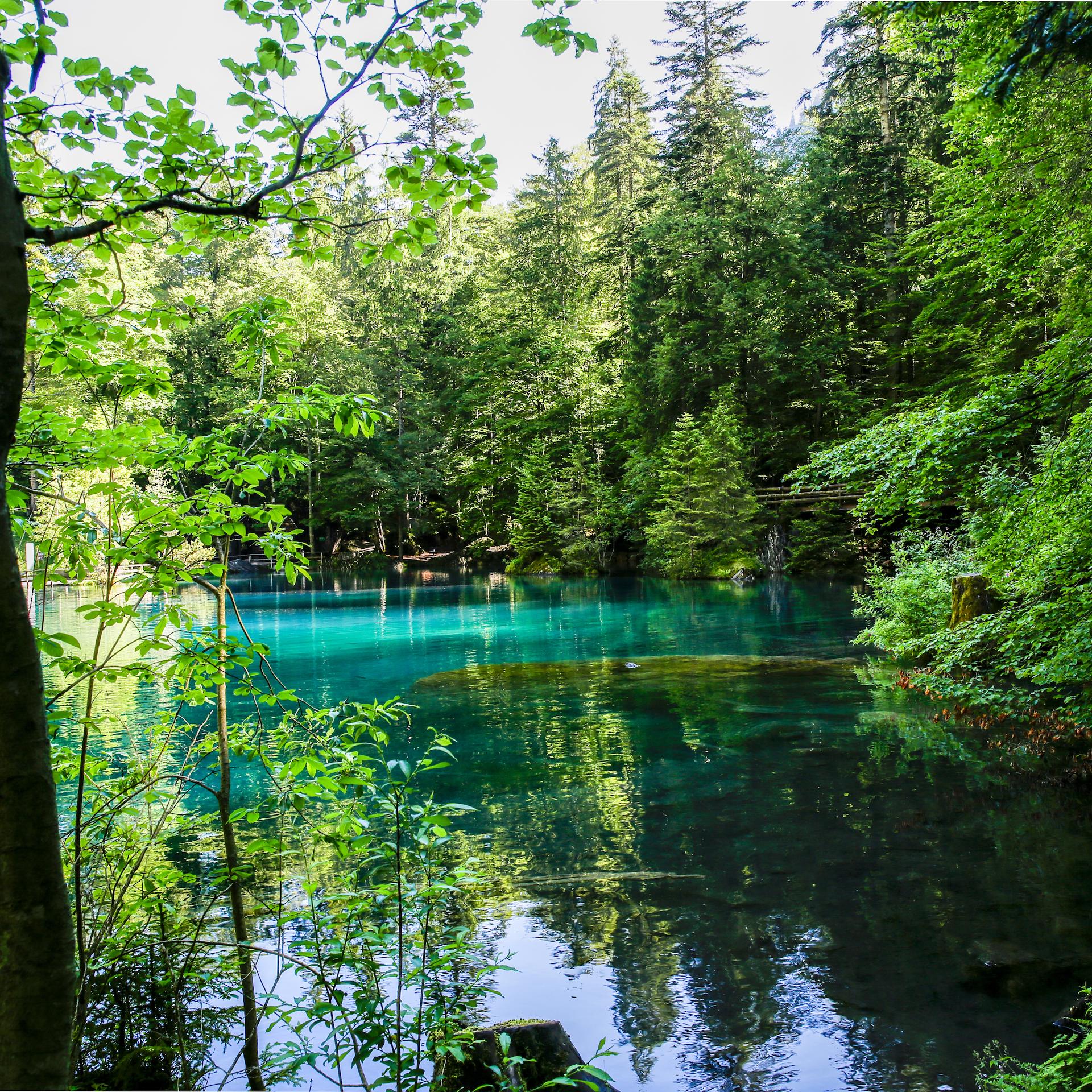 Ein blau schimmernder See, von grünen Bäumen umgeben